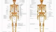 Анатомія людини на фото