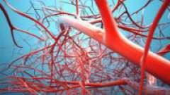Ангіопротектори - захисники судин