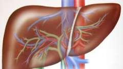 Біль в печінці, жировий гепатоз, гепатит. Лікування народними засобами.