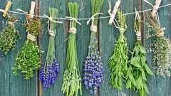 Цілющі трави для волосся: користь відварів