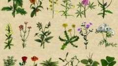 Цілющі трави та їх властивості і призначення