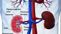 Чим небезпечне розвиток хронічної ниркової недостатності