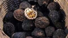 Чорний горіх від паразитів: рецепти і застосування