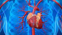 Що означає діагноз «дифузний кардіосклероз»?