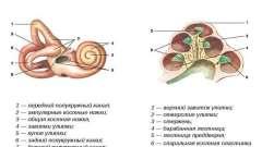 Що являє собою лабіринтит і як його вилікувати