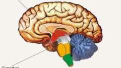 Гормони гіпофіза та гіпоталамуса: співвідношення, функції і можливі захворювання