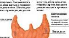 Гормони щитовидної залози: функції, призначення та відхилення від норми