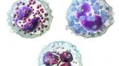 Гранулоцити: норма в крові і патологія, хто до них відноситься, функції та роль в організмі