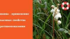 Грушанка: лікувальні властивості і застосування