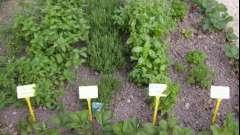 Хороший сечогінний трави для схуднення