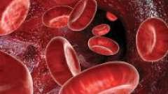 З чого складається кров і яка її роль в організмі людини