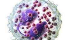 Еозинофіли: для чого потрібні, норми в крові, причини відхилень