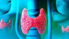 Як і навіщо здавати кров на гормони щитовидної залози?