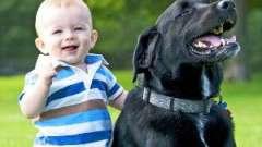 Як захистити себе від нападу собак. Перша допомога при укусі собакою людини