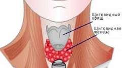 Як зрозуміти збільшена у вас щитовидна залоза