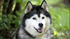 Якими глистами можна заразитися від собаки?