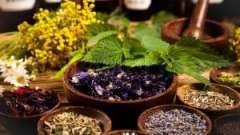 Якими травами можна ефективно і безпечно вилікувати мастопатію