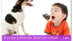 Коли дитина боїться собак - як відкрити малюкові всі радощі навколишнього світу