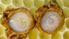 Маточне бджолине молочко лякає хвороби і лікує легко!