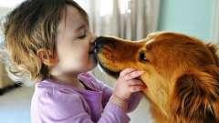 Чи можуть передатися глисти від собаки до людини?