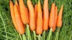 Морква: корисні властивості та протипоказання