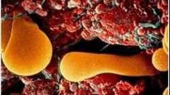 Норма білка тиреоглобуліну після задушення щитовидної залози