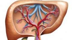 Особливості будови печінки і ехографічні ознаки дифузних зміни в ній