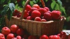 Корисні властивості аличі, її склад та харчова цінність