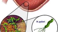 Корисні трави при гастриті шлунку