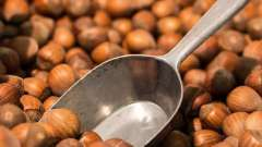 Користь і шкода горіха фундука: способи застосування і протипоказання