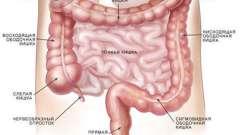 Правильна здача аналізу на дисбактеріоз кишечника