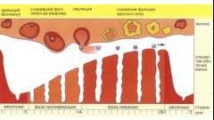 Причини появи коричневих виділень під час овуляції