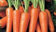 Продукт на мільйон доларів, або чим корисна морква!