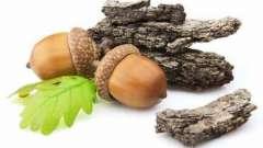 Дубова кора і її використання в народній медицині