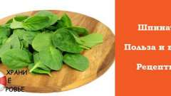 Шпинат - корисні властивості і рецепти