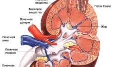 Симптоми гострого та хронічного гломерулонефриту