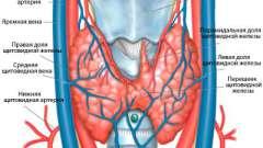 Таблиця норм узі щитовидної залози