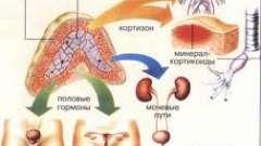 Захворювання надниркових залоз і їх діагностика