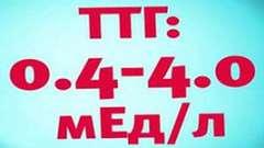 За що відповідає ттг (тиреотропний) гормон